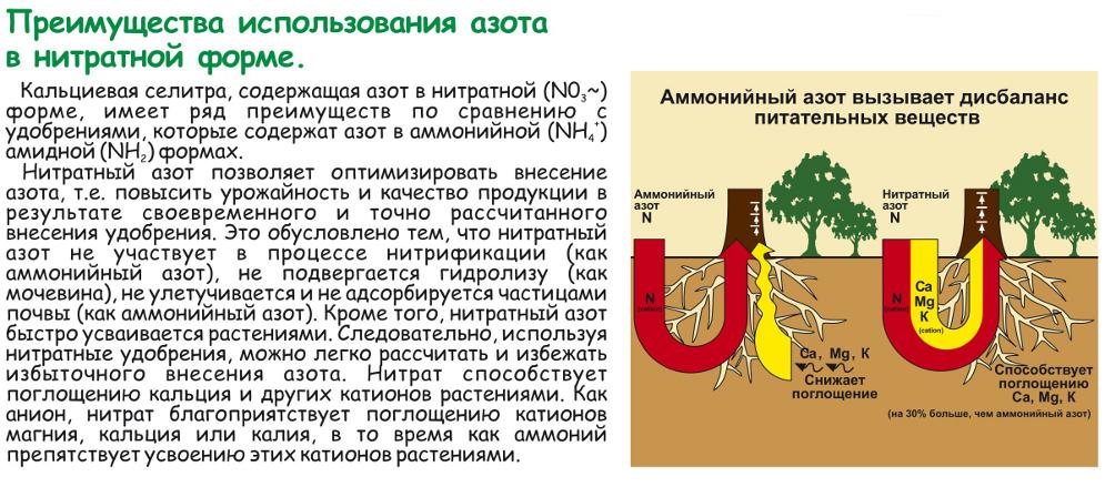 селитра кальциевая применение для капусты