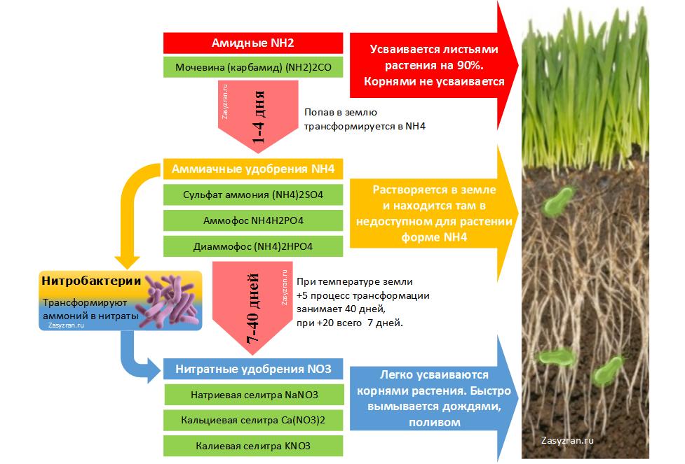Типы азотных удобрений